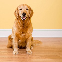 Best Hardwood Flooring For Dogs light hardwood flooring best for dogs Pets