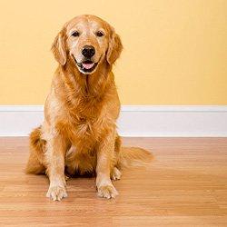 Best Hardwood Floor For Dogs hardwood flooring harming best hardwood flooring omfy best Pets